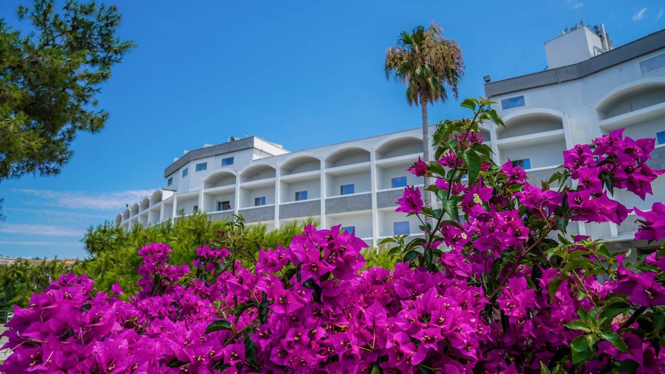 Santa-Caterina-Village-Scalea-деревня-отель-фиолетовые-цветы-DSC09523